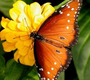 butterfly, transcendence